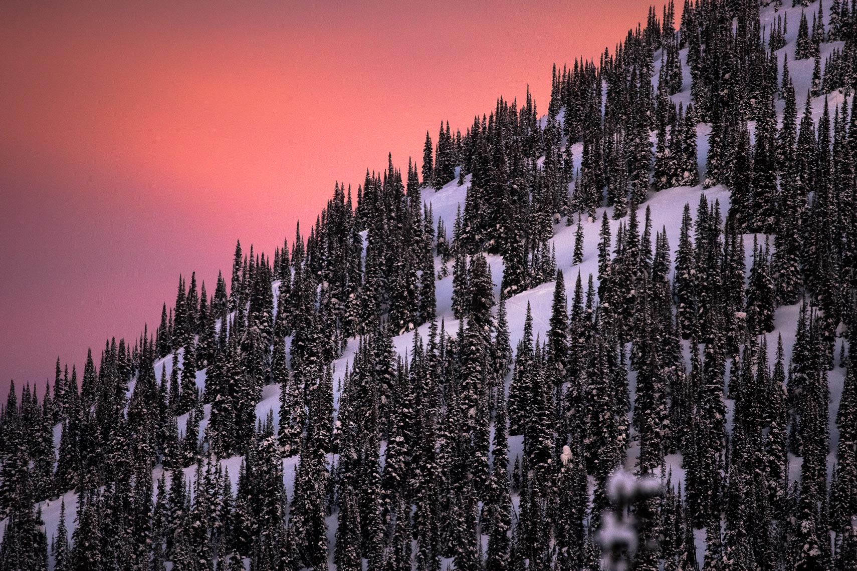 Mountain trees at sunset in British Columbia, Canada by commercial and travel photographer