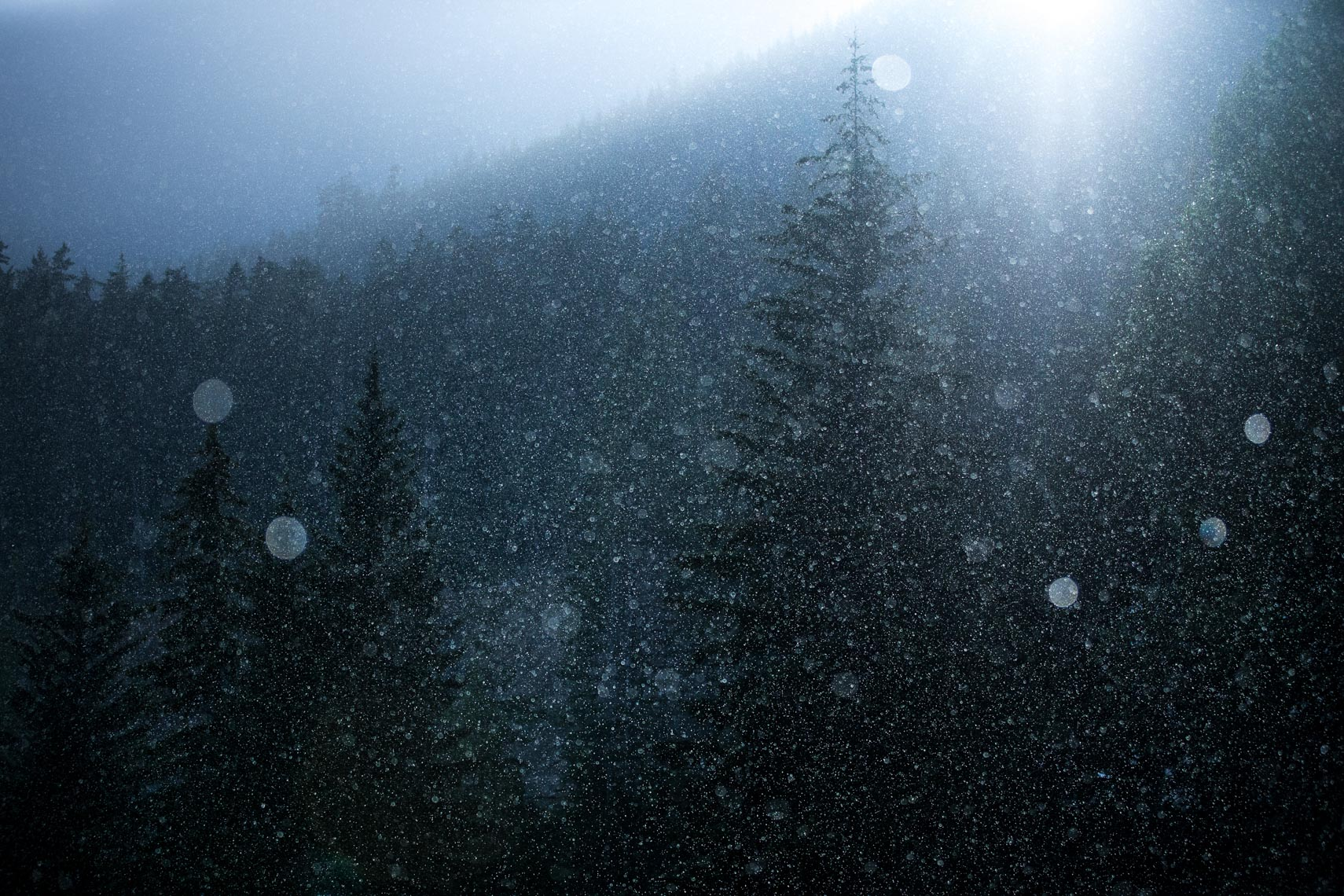 Whistler British Columbia tree and snowflake landscape photography image