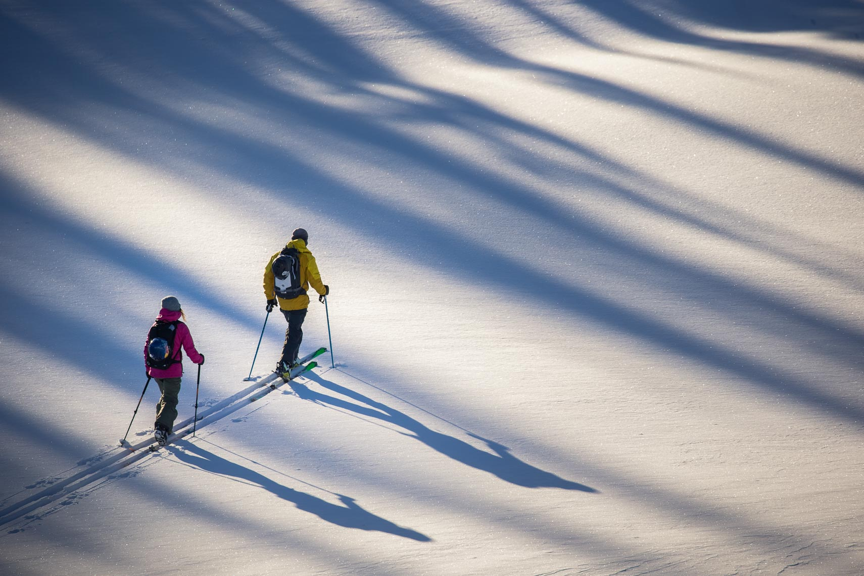 Ski touring in the snow with long shadows in interior british columbia